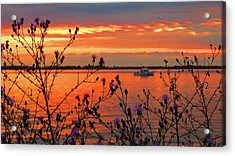 Flowers Along The Shore At Tibbetts Point  Acrylic Print