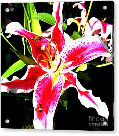 Flowers And Bees Acrylic Print by Jerome Stumphauzer