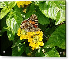 Flowers And Butterfly Acrylic Print by Gonca Yengin