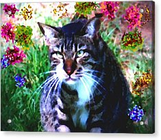 Flowers And Cat Acrylic Print by Dr Loifer Vladimir