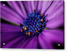 Acrylic Print featuring the photograph Flowers And Sand by Darren White