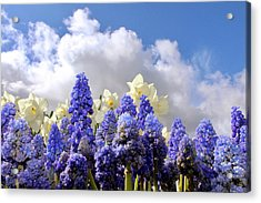 Flowers And Sky Acrylic Print