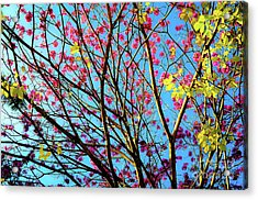 Acrylic Print featuring the photograph Flowers And Trees by D Davila