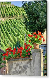 Flowers And Vines Acrylic Print by Alan Toepfer