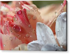 Acrylic Print featuring the photograph Flowers And Water Droplets by Angela Murdock
