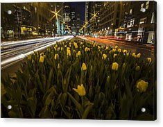 Flowers At Night On Chicago's Mag Mile Acrylic Print