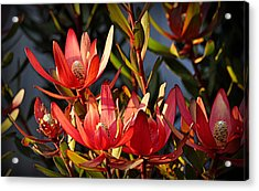 Acrylic Print featuring the photograph Flowers At Sunset by AJ Schibig