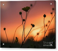 Flowers At Sunset Acrylic Print