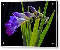 Flowers Backlite. Acrylic Print by Josephine Buschman