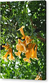 Flowers  Acrylic Print by Denise Ellis