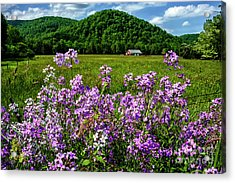 Flowers Field And Barn Acrylic Print by Thomas R Fletcher