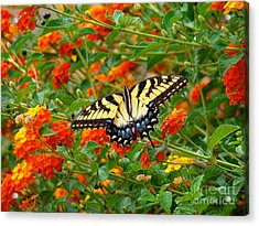 Acrylic Print featuring the photograph Flowers For Butterflies by Sue Melvin