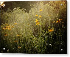 Flowers For My Love Acrylic Print by Sarah Boyd