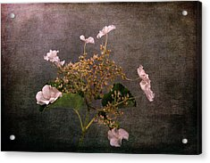 Acrylic Print featuring the photograph Flowers For The Mind by Randi Grace Nilsberg