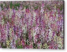 Flowers Forever Acrylic Print by Carol Groenen