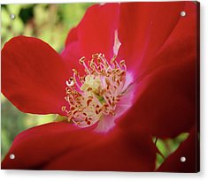 Acrylic Print featuring the photograph Flowers Garden by Jeremy Martinson