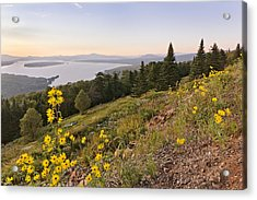 Flowers Height Of Land Acrylic Print