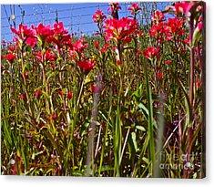 Flowers High Acrylic Print by Chuck Taylor