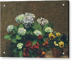 Flowers  Hydrangea, Wallflowers, Two Pots Of Pansies Acrylic Print by Ignace Henri Jean Fantin-Latour