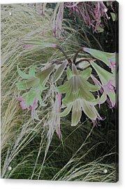 Flowers In Berkeley Acrylic Print
