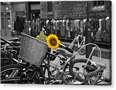 Flowers In Bike Acrylic Print by David Warrington