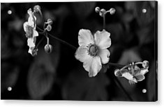 Flowers In Black And White Acrylic Print