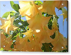 Flowers In The California Sun Acrylic Print by Carrie Maurer