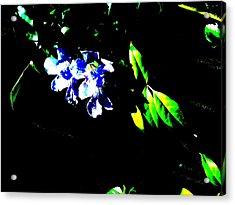 Flowers In The Dark Acrylic Print by Douglas Kriezel