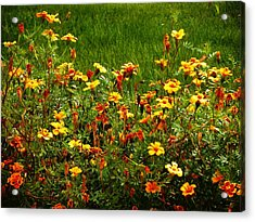 Flowers In The Fields Acrylic Print by Joseph Frank Baraba