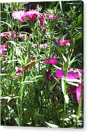 Flowers In The Garden Vii Acrylic Print by Daniel Henning