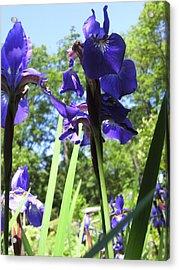 Flowers In The Garden X Acrylic Print by Daniel Henning