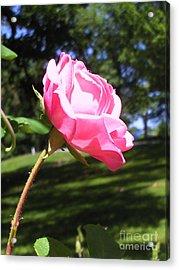Flowers In The Garden Xix Acrylic Print by Daniel Henning
