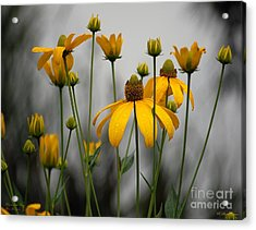 Flowers In The Rain Acrylic Print by Robert Meanor