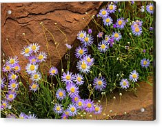 Flowers In The Rocks Acrylic Print by Darren White