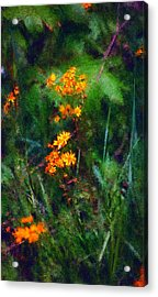 Flowers In The Woods At The Haciendia Acrylic Print
