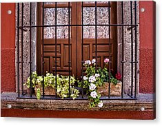 Flowers In Window Box San Miguel De Allende Acrylic Print by Carol Leigh