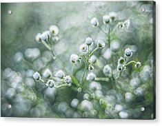 Acrylic Print featuring the photograph Flowers by Jaroslaw Grudzinski