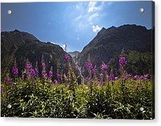 Flowers Line Acrylic Print