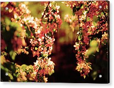 Acrylic Print featuring the photograph Flowers by Lucian Capellaro