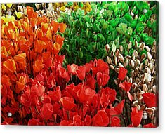 Flowers Acrylic Print by Mohammed Nasir
