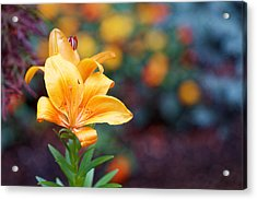 Flowers Of Central Park IIi Acrylic Print by M Nuri Shakoor