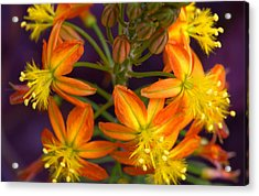 Flowers Of Spring Acrylic Print by Stephen Anderson