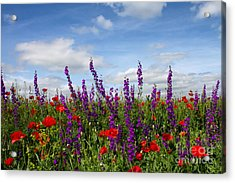 Flowers Of The Field Acrylic Print by Diana Kraleva