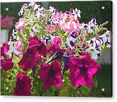 Flowers Really Do Smile Acrylic Print by Sunaina Serna Ahluwalia