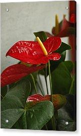 Flowers Rising Acrylic Print by Lori Mellen-Pagliaro