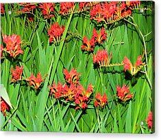Flowers Singing Acrylic Print by Mel Crist