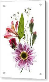 Acrylic Print featuring the photograph Flowers Transparent 1 by Tom Mc Nemar