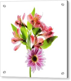 Flowers Transparent  2 Acrylic Print by Tom Mc Nemar