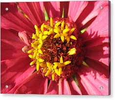 Flowers With In The Flower Acrylic Print by Rebecca Shupp