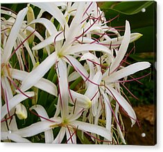 Flowery Tentacles Acrylic Print by Ashley Butler